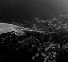 Ray  in panorama by Stephen Colquitt