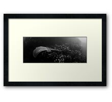 Ray  in panorama Framed Print