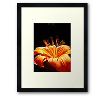 Tiger Lilly Framed Print