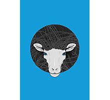 Funky Sheep Photographic Print