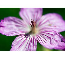 Wildflower 5 Photographic Print