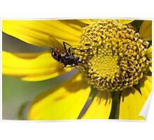Wildflower 6 Poster