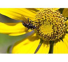 Wildflower 6 Photographic Print