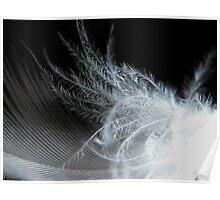Macro Small White Feather Poster