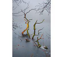 Ice Serpent Photographic Print