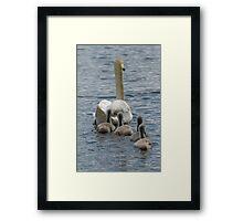 Swan and Cygnets Framed Print