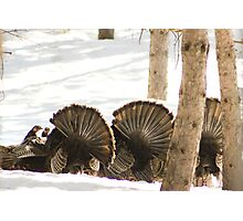 Mooned!.....by wild Turkeys Photographic Print