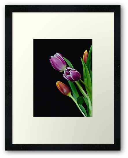 Spring Blooms by Myron Watamaniuk