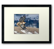Red-Tailed Hawk Banking Away Framed Print
