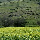 Pallete from the Galilee in Spring Time by Nira Dabush