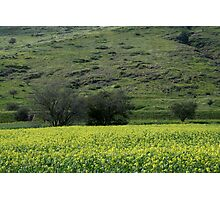 Pallete from the Galilee in Spring Time Photographic Print