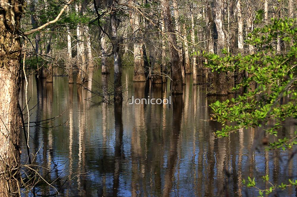 Cypress Reflections by Jonicool