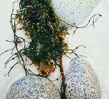 Beachstone Medley by Nancy Barrett