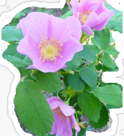 Wild Rose.Tee Sticker