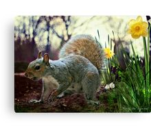 Harry in Spring Canvas Print