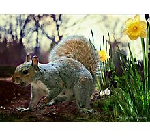 Harry in Spring Photographic Print