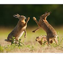 Boxing Brown Hares by Simon Litten