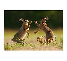 Boxing Brown Hares Photographic Print
