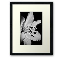 Flora Still Life Framed Print