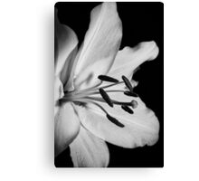 Flora Still Life Canvas Print