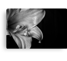 Monochrome Easter Lily Canvas Print