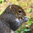 I'm nuts... by Finbarr Reilly
