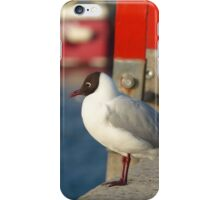 Franklins Gull - Beautiful picture of a bird at a harbor iPhone Case/Skin