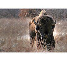 Where the Buffalo Roam Photographic Print