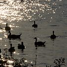 Geese Silhouette by Sean McConnery