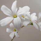 White by Tracy Wazny