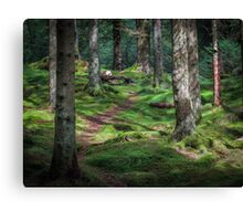 Forest Above Bergen Canvas Print
