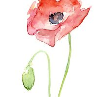 Red Poppy Watercolor by OlechkaDesign