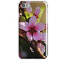 Peach Tree Blooms iPhone Case/Skin