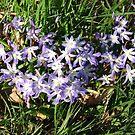 Spring Flowers No2 by paul boast