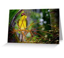 singing bird Greeting Card