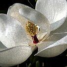 Sweet Magnolia by Terri~Lynn Bealle