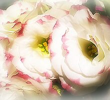 Lisianthus (Prairie Rose) - Always lovely by EdsMum
