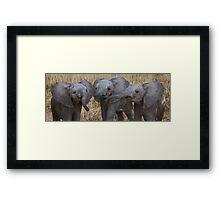 BABY ELEPHANTS - KENYA Framed Print