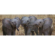 BABY ELEPHANTS - KENYA Photographic Print