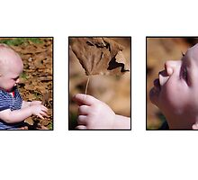 autumn baby - a story in pictures by Clare Colins