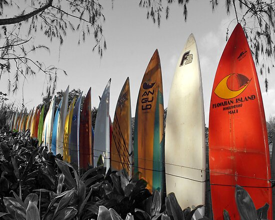 Surfboard Fence by David Turton