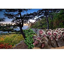1173-Furry Bunch Photographic Print