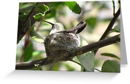 Nesting II by Kimberly Chadwick
