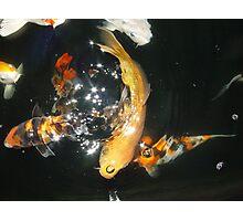 Koi Universe Photographic Print