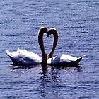Lover Swans by David Turton