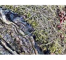 Silver Maple Root, Moss, Grass, Flower Photographic Print