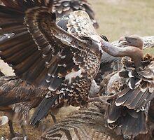 scavengers by karen peacock