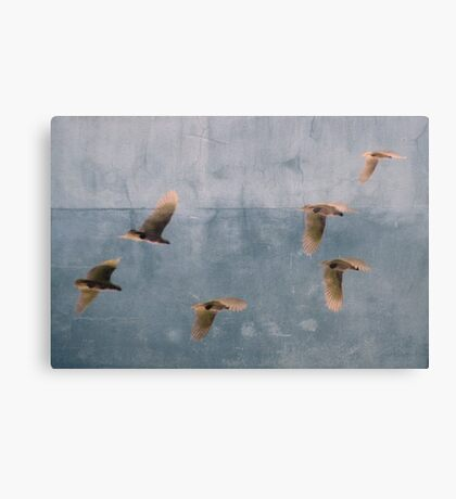 Free Spirits Canvas Print
