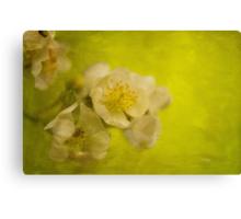 My Sweet Wild Rose Canvas Print