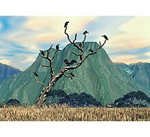 Vultures Roost Photographic Print